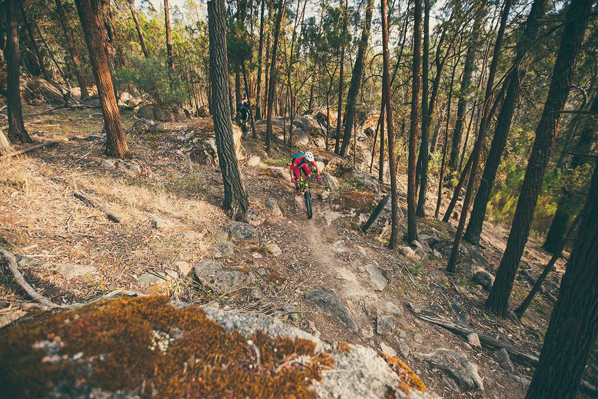 Mountain Biking Beechworth Singletrack Cross Country