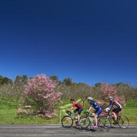 Rutherglen road cycling